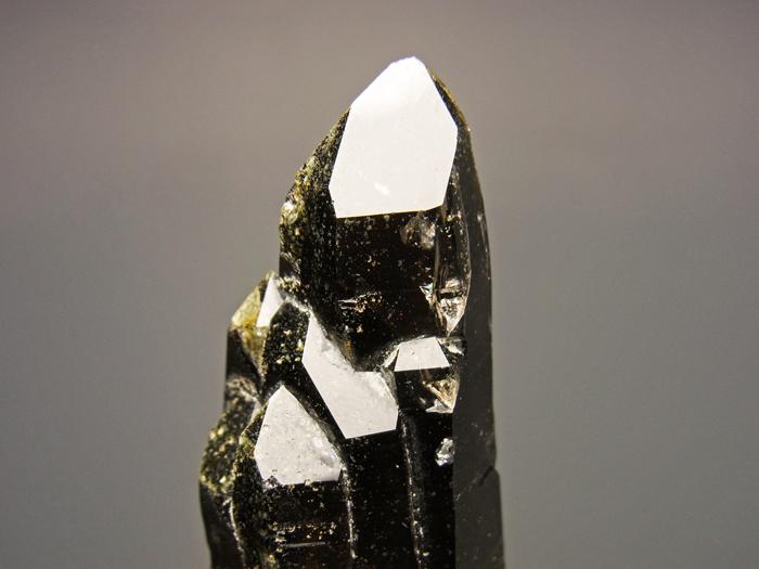 岐阜県蛭川田原産 煙水晶&白雲母 (Smoky Quartz & Muscovite / Japan)-photo7
